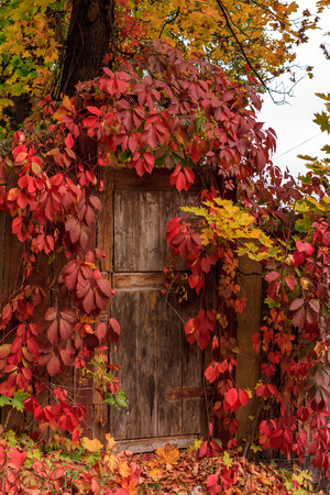 country living: leaf fall, wood door, red leaves, Country Living, country town, melancholy, peace, calm, quiet, silence, beauty, nature