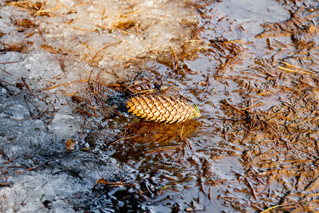 All'inizio della primavera in città parco creek urto