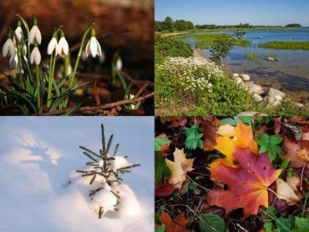 Photo collage depicting circle of life: spring, summer, autumn, winter photo