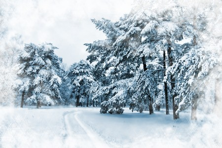 Ski trails through snow covered landscape with snowy pine trees, illustrated with snowflakes frame photo