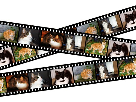 Three filmstrips of cats isolated on white photo