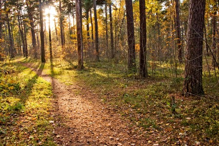 Warm sunlight shining through trees in autumn forest Stock Photo - 7404102