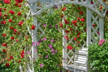 두서없는: Red rambling roses around white wooden park bench