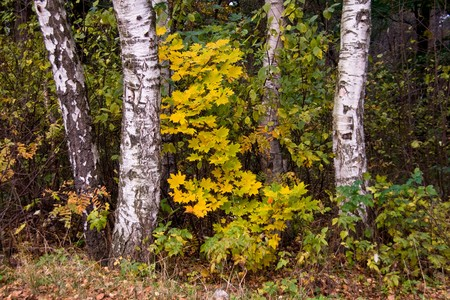 autumnal forest Stock Photo - 7398564