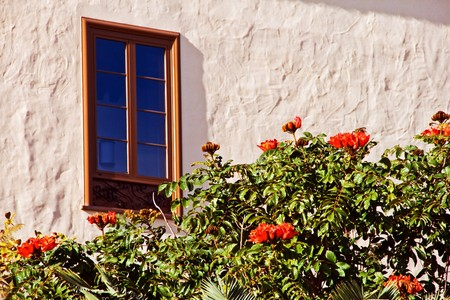 nandi: Window and flowering tree with orange flowers in the Canary Islands