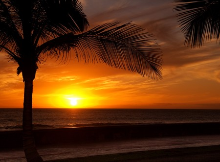 Sun is setting in the ocean, a palm tree silhouette in front Stock Photo - 7435915