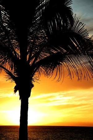 Palm tree silhouetted against dramatic sky at sunset Stock Photo - 7435910