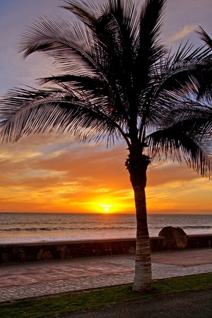 Sun is setting in the ocean, a palm tree silhouette in front Stock Photo - 7436141