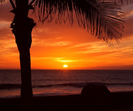 Orange sunset over the ocean and a palm tree silhouette Stock Photo - 7435838