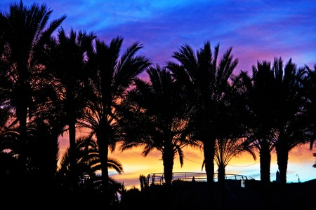 Tropical palms silhouettes against colorful sunset Stock Photo - 7435841