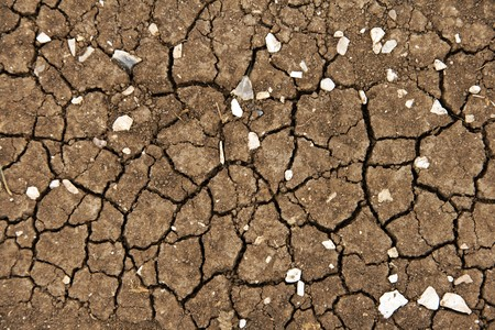 Brown cracked earth with white stones photo