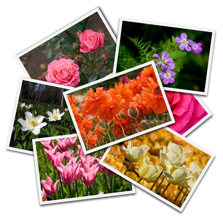 flower photos: Flower postcards isolated on the white background. All images created by maigi.