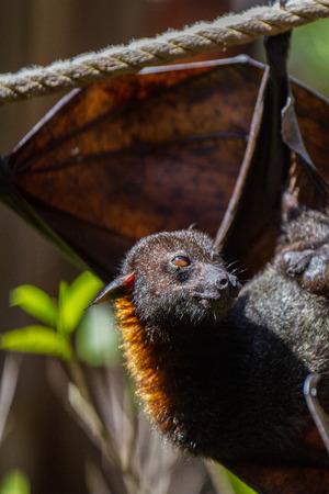 Bat hanging on the tree Standard-Bild