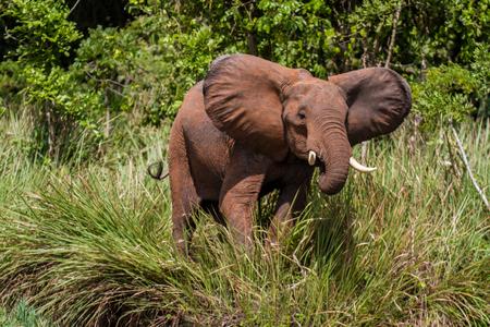 Elephant Standard-Bild