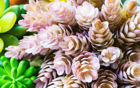 Miniature succulent plants ,colorful and fresh