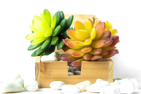 green and orange succulent in the wooden square box on white background have white stone around