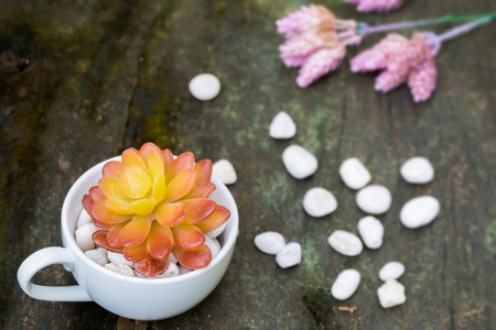 Orange succulent in white cup with white stone and pink succulent at the corner on old wood background Stock Photo