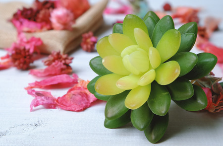 Green succulent and dried pink flower on vintage wooden table Stock Photo