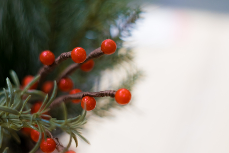 Soft focused on Holly tree ,sign of Christmas festival