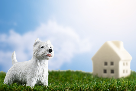 White dog stand on green grass front of little house on blue sky background