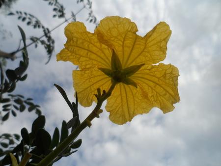yellow: Flower yellow Stock Photo