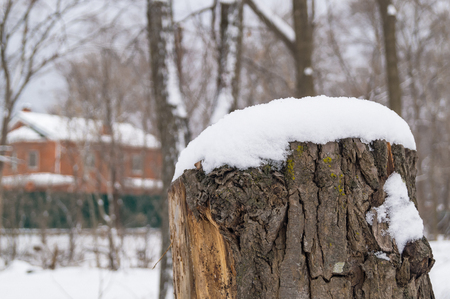 now on a wooden stump. Welcome winter Stock Photo