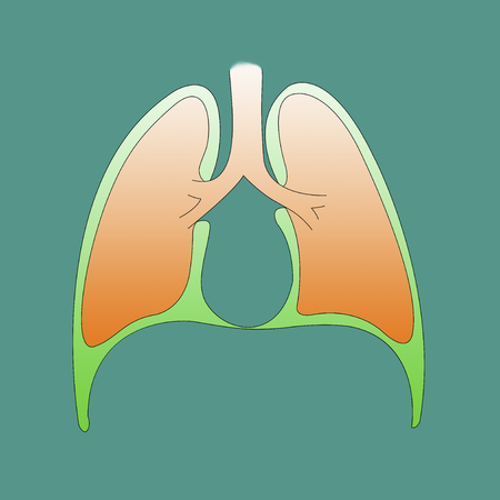 Respiratory system infographic of the pleura on a green background to understand a concept study and research Stock Photo