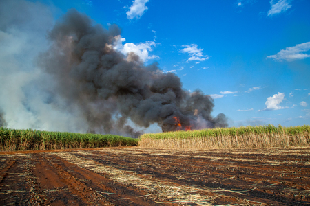 sugar cane plantation and fire