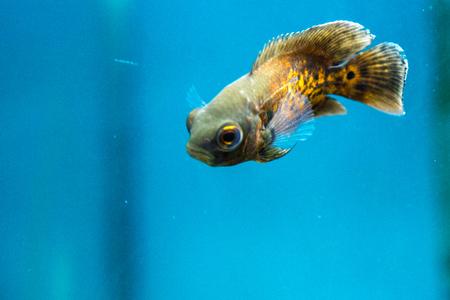 fish aquatic ornament tank relaxation
