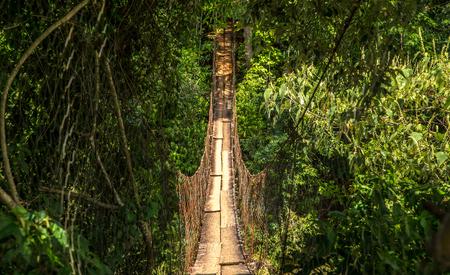 wood bridge national park brazil Stock Photo