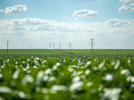 soy plantation with sky on the horizon and macro details