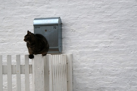 Cat sitting on a fence