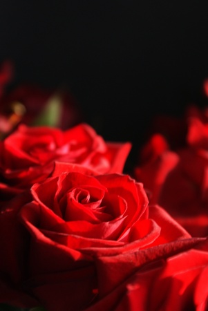 Roses on black background Stock Photo - 12636450
