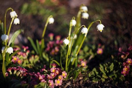 White bellflowers in sunlight photo