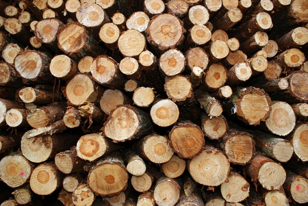 Deforestation, stack of timber Stock Photo - 13122349