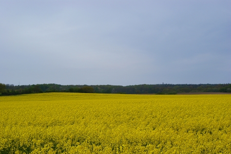 countrysides: Landscape with rapeseed fields Stock Photo