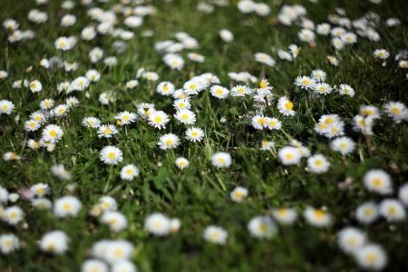 Pretty daisies springing up everywhere Stock Photo - 13798983