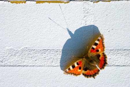 Tortoise, butterfly on wall photo