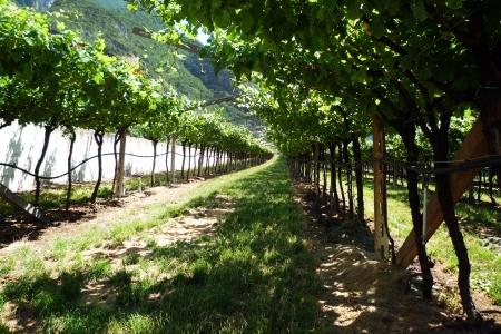 wine stocks: Wine stocks in row
