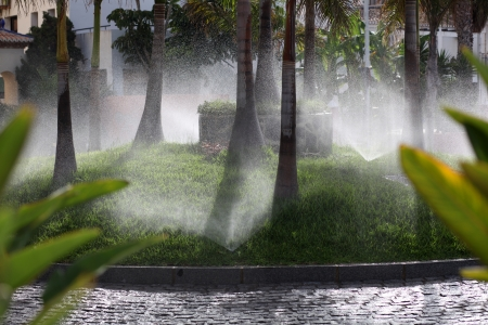 Watering tropical palm trees in roundabout Stock Photo - 14403292