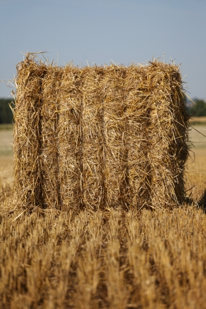 Close up on the lines of field and hay bale photo