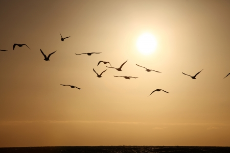Flock of seagulls in sunset photo