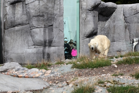Visit to polar bear cave  Copenhagen Zoo