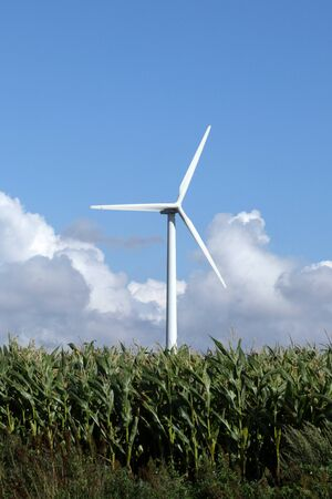 Wind turbine producing green electricity in corn field, Agricultural landscape