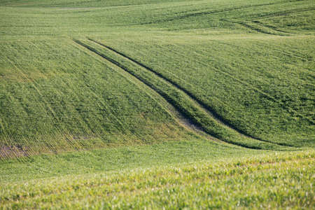 Beautiful green field with some tractor tracks
