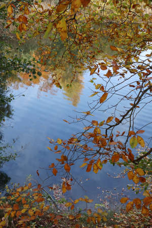Autumn branches and autumn leaves hang colorfully over the lake