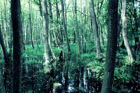 wasser: Wald unter Wasser Stock Photo