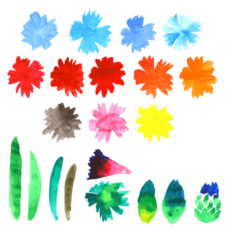 Vector watercolor blue cornflower on white backdrop. Isolated beautiful hand drawing summer flowers. Floral illustration