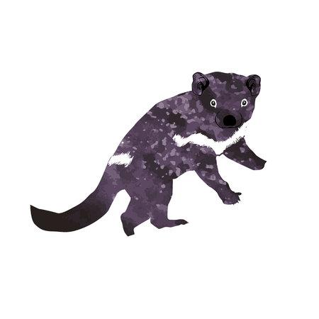 tasmanian: Tasmanian devil (Diabolus ursinus). Animal Australia