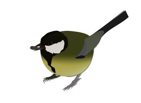 Cartoon titmouse  illustration. Green and blue titmouse bird character